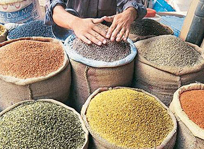 Food Processing (Pulses)